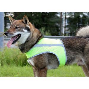 Brava ATTE koiranhuomioliivi koko M